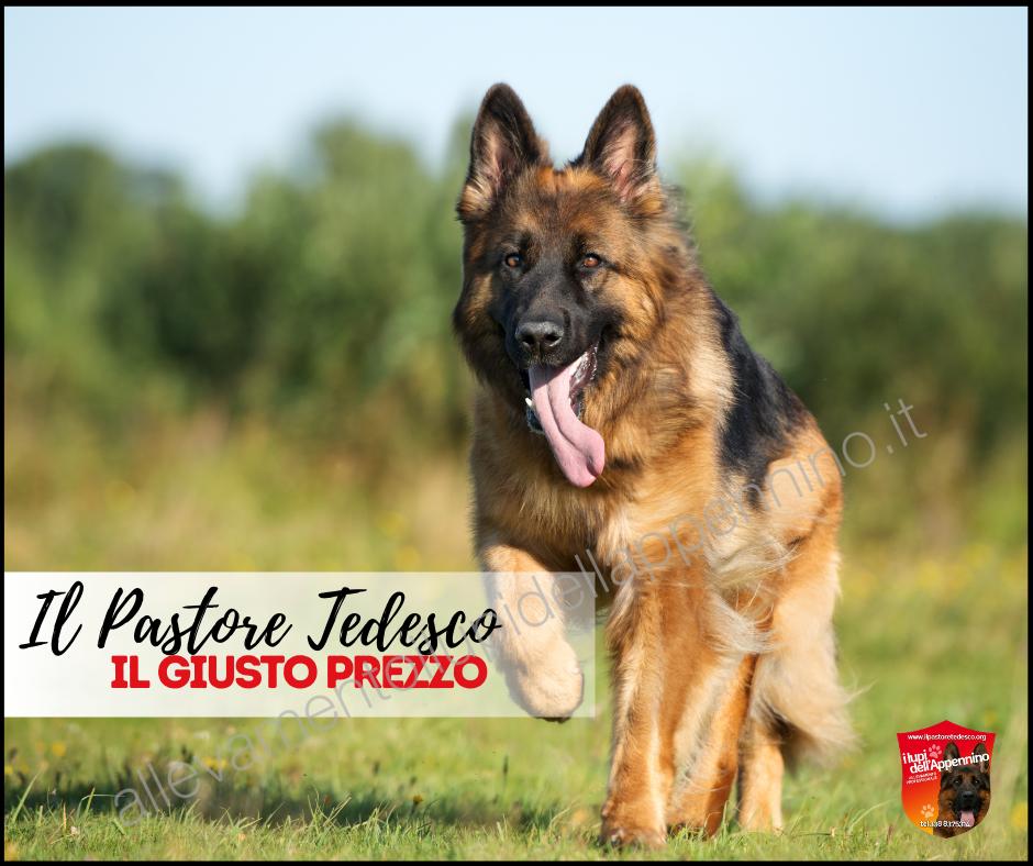 Il giusto prezzo di un cucciolo di pastore tedesco